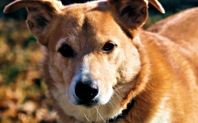 smarrito in una zona boschiva cane segugio