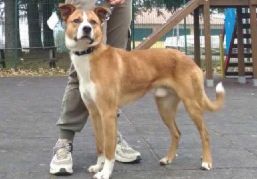 cane marroncino sguardo felice