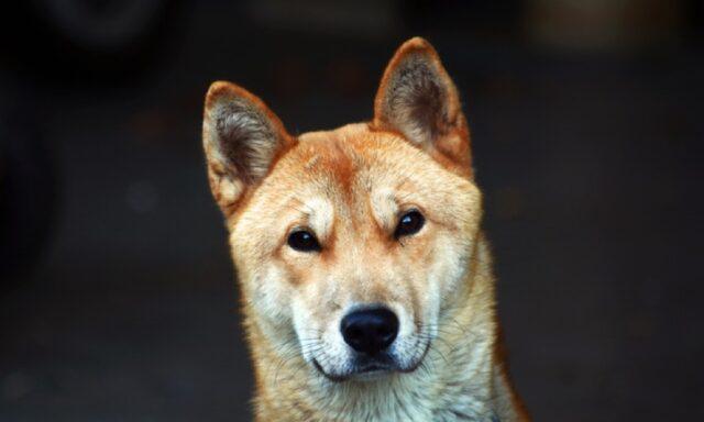 perso cane ciccio durante gita
