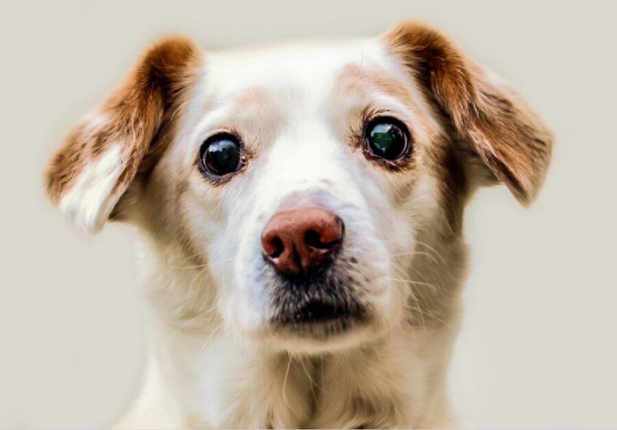 cucciolo di cane occhi profondi