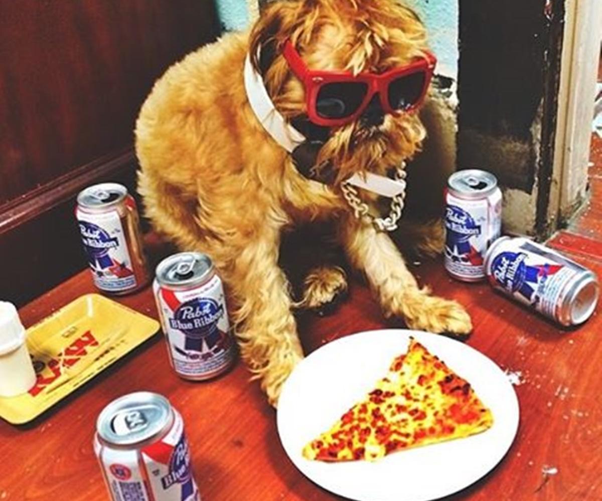 cane serata