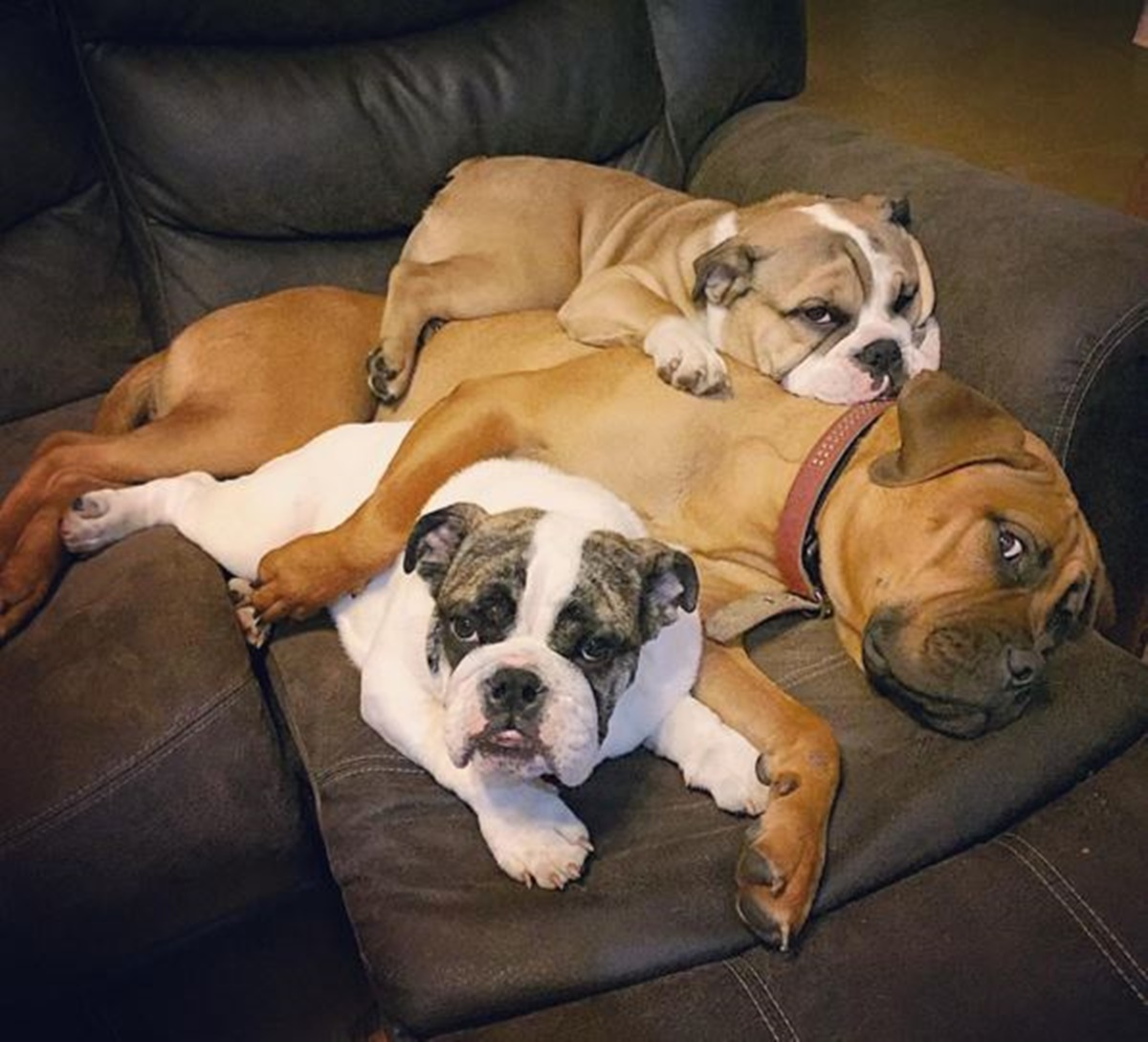 cani divano