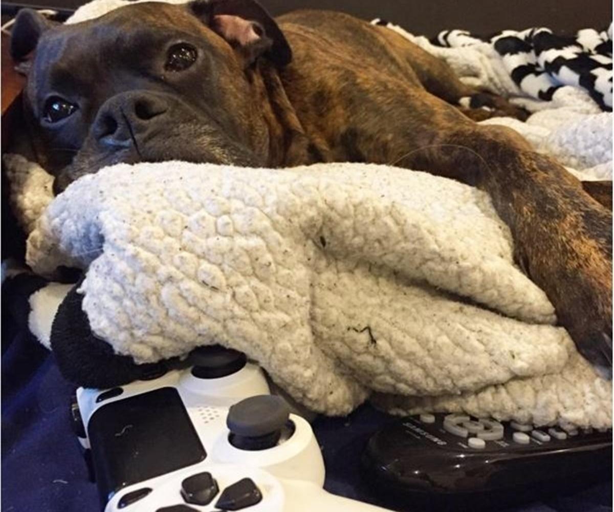 cane gioca alla console