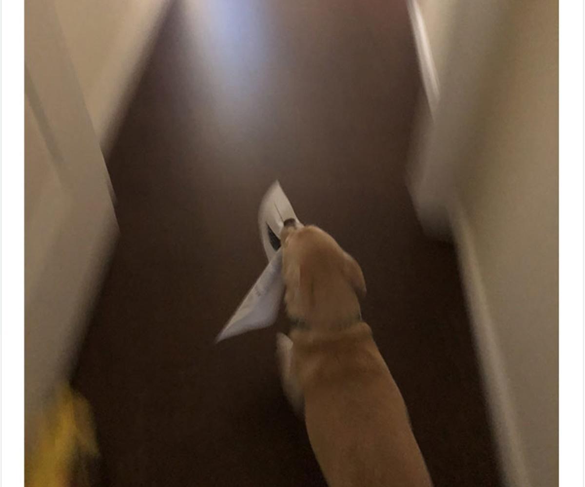 cane foglio