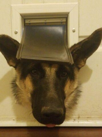 cane nella buca gatto