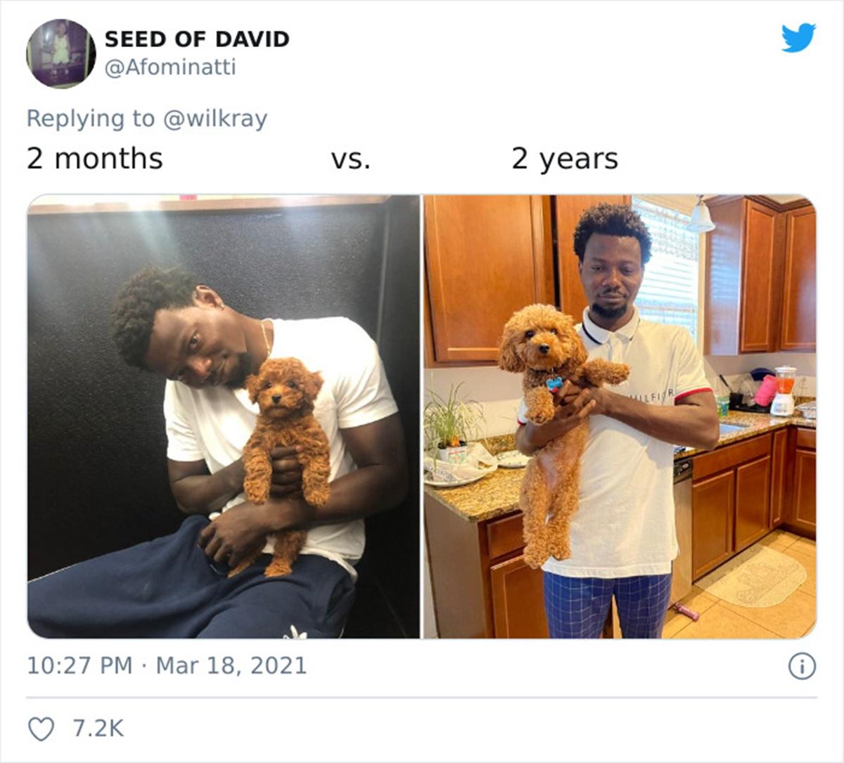 cane cucina