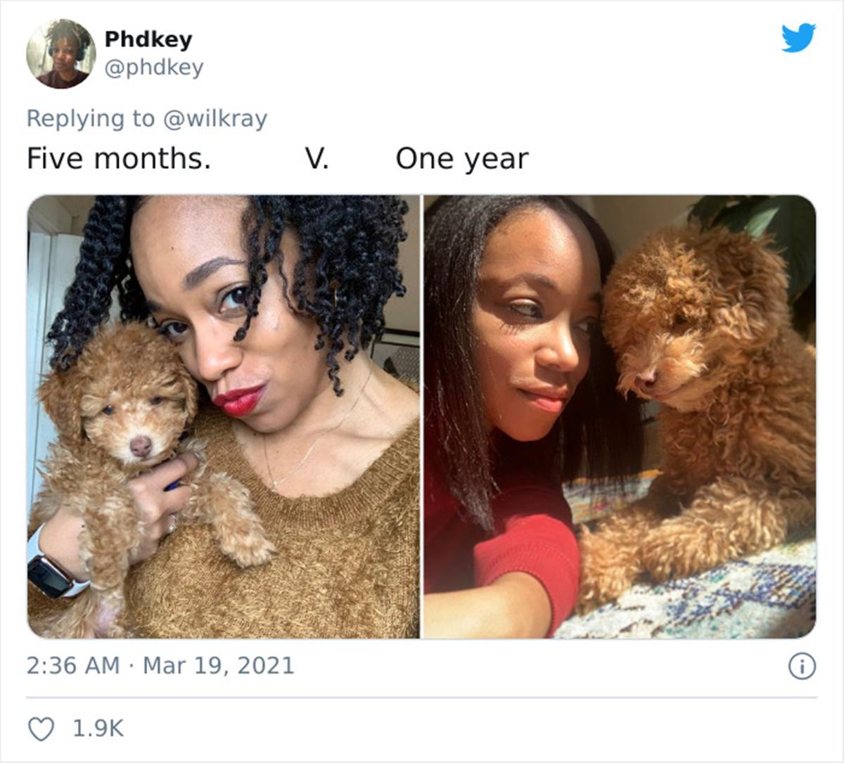cane ricci