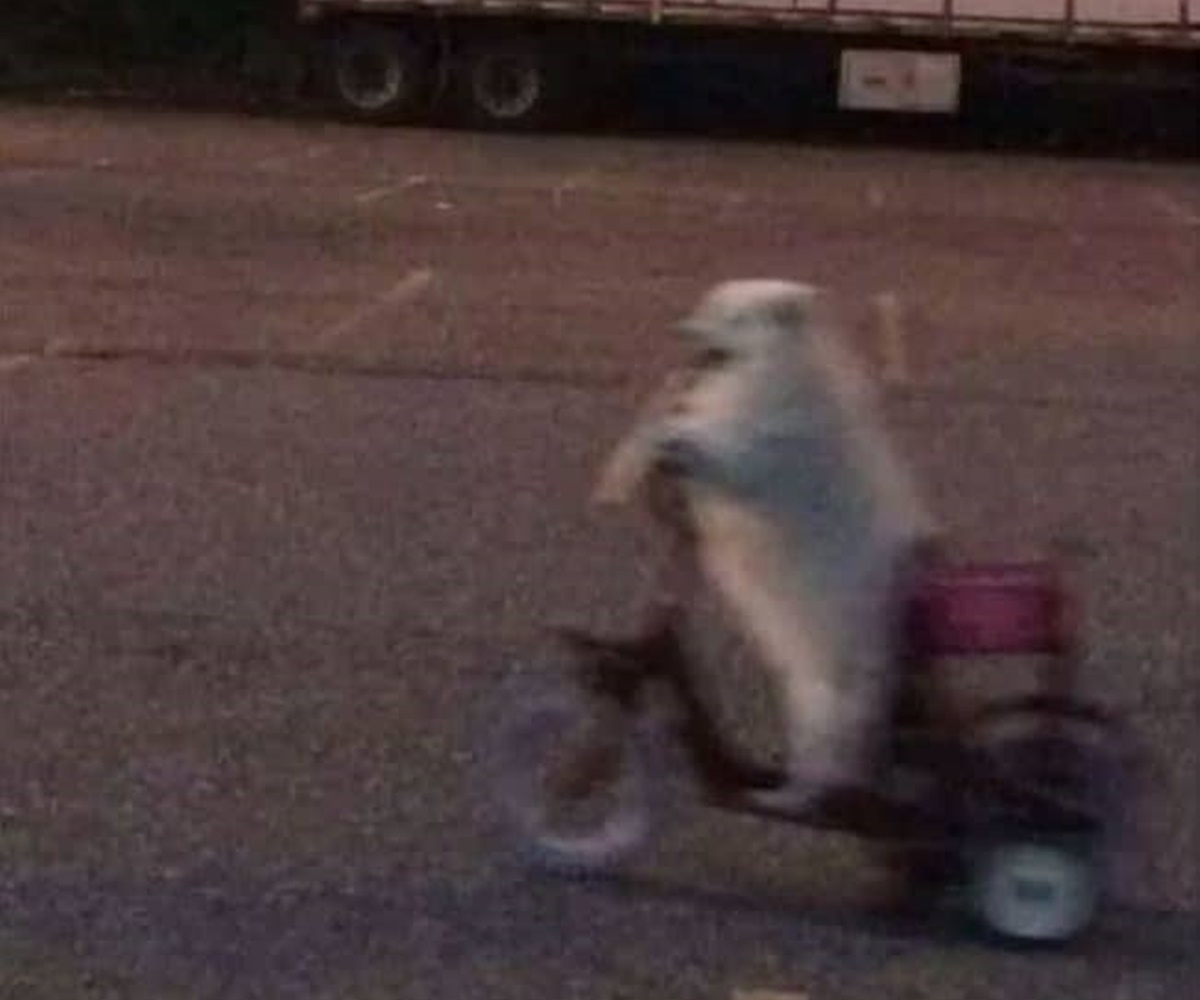 cane scooter