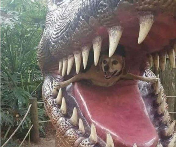 cane mangiato da dinosauro
