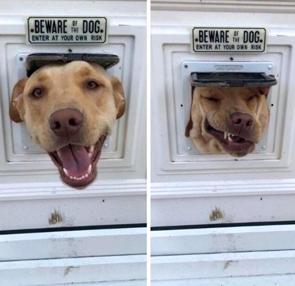 cane buco porta