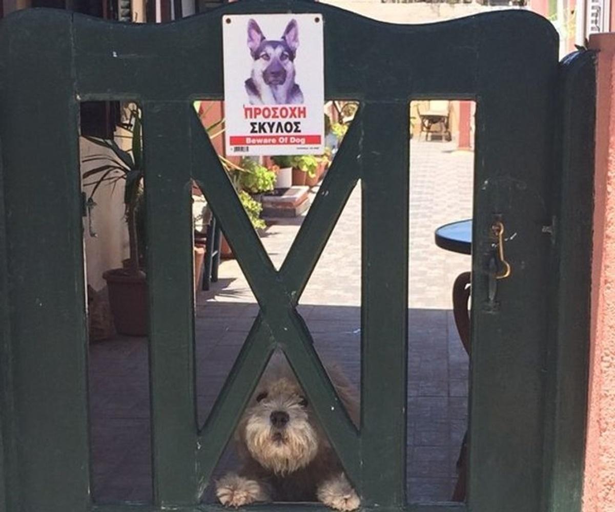 cane cancello