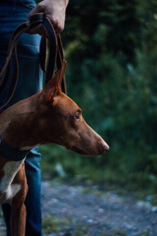 cane bosco notte