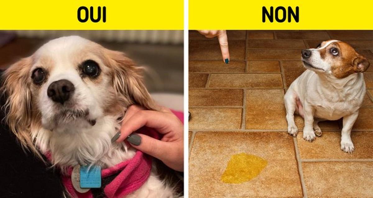 cane sgridata