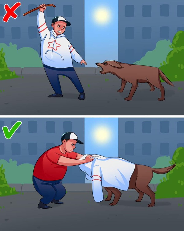 cane attacco