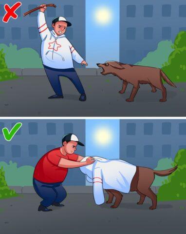 cane copri