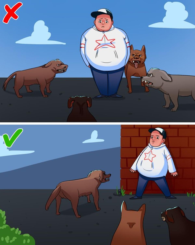 cane muro