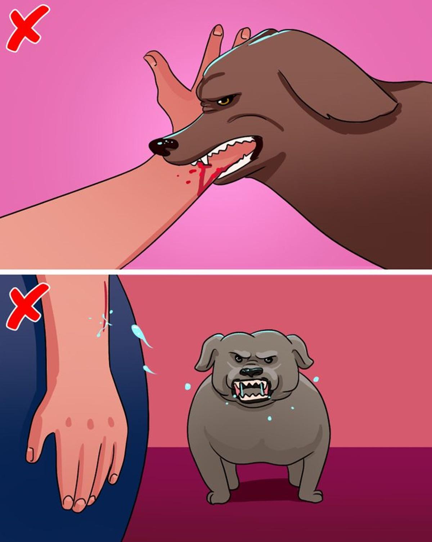 cane morso