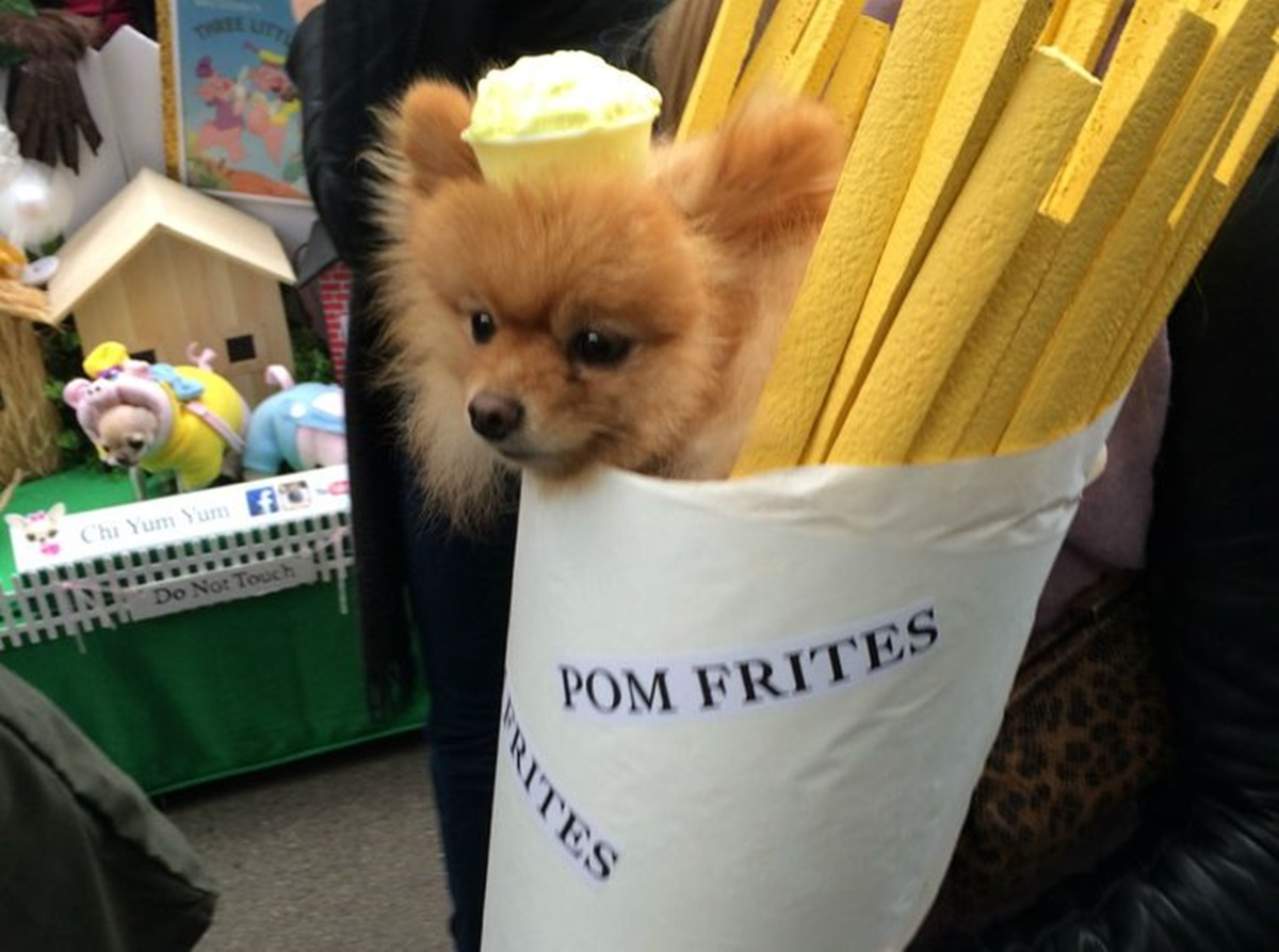 cane patatina