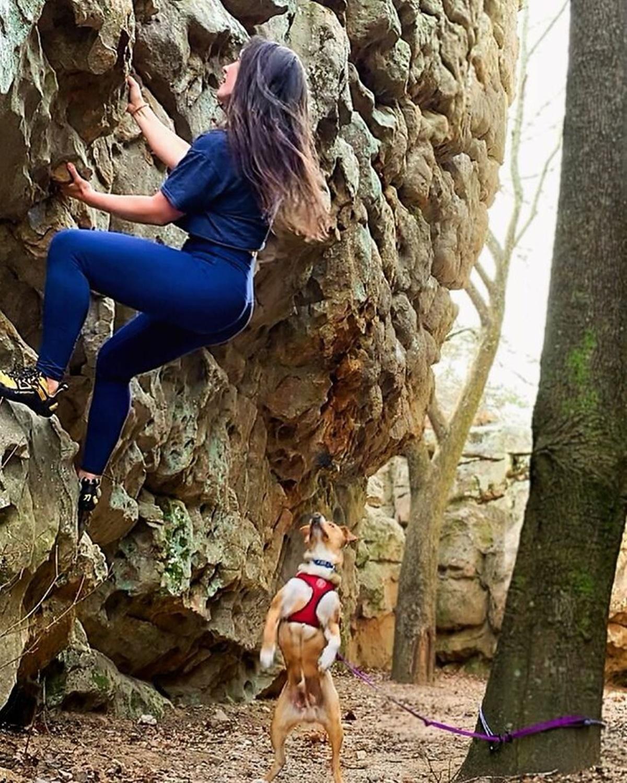 cane scalata
