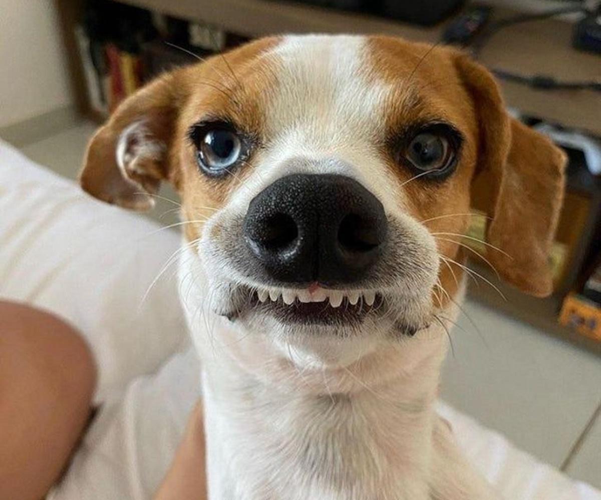 cane sorriso