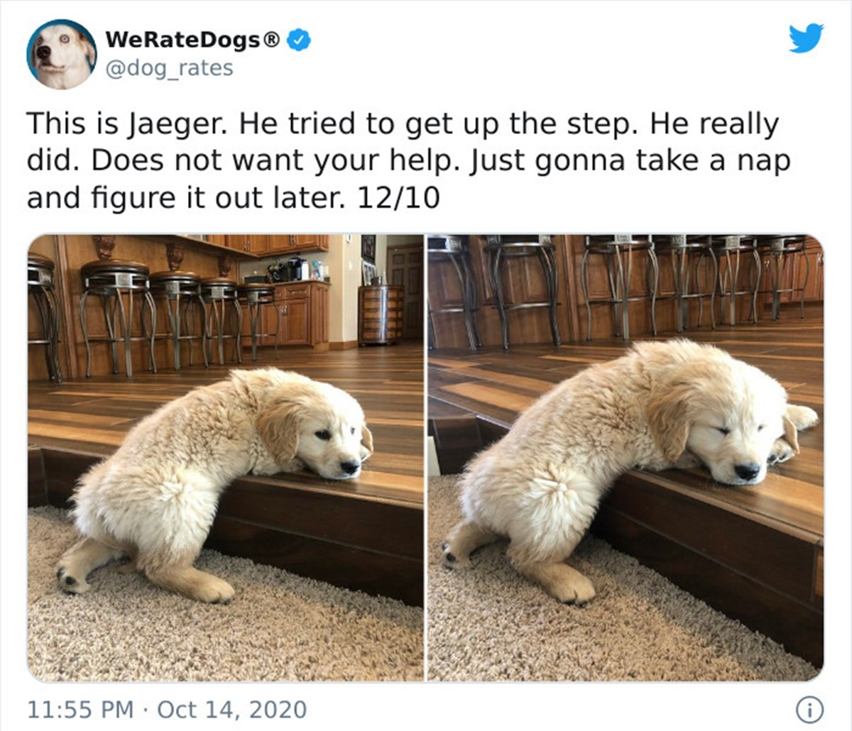 cane scalino