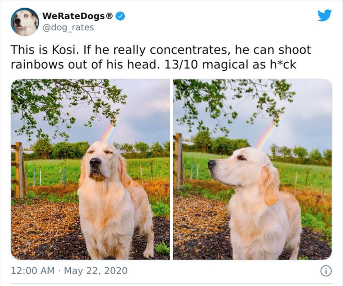 cane arcobaleno