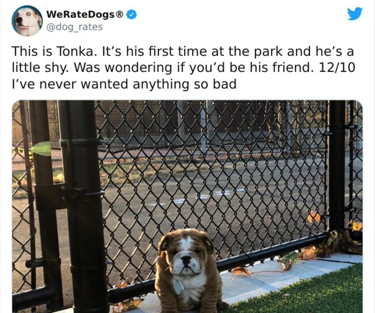 cane parco