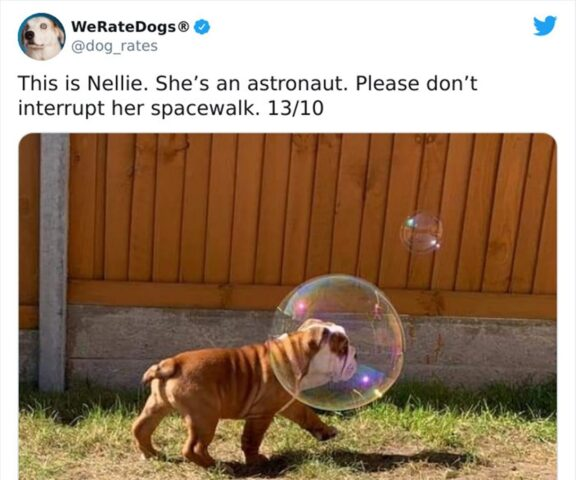 cane bolla di sapone