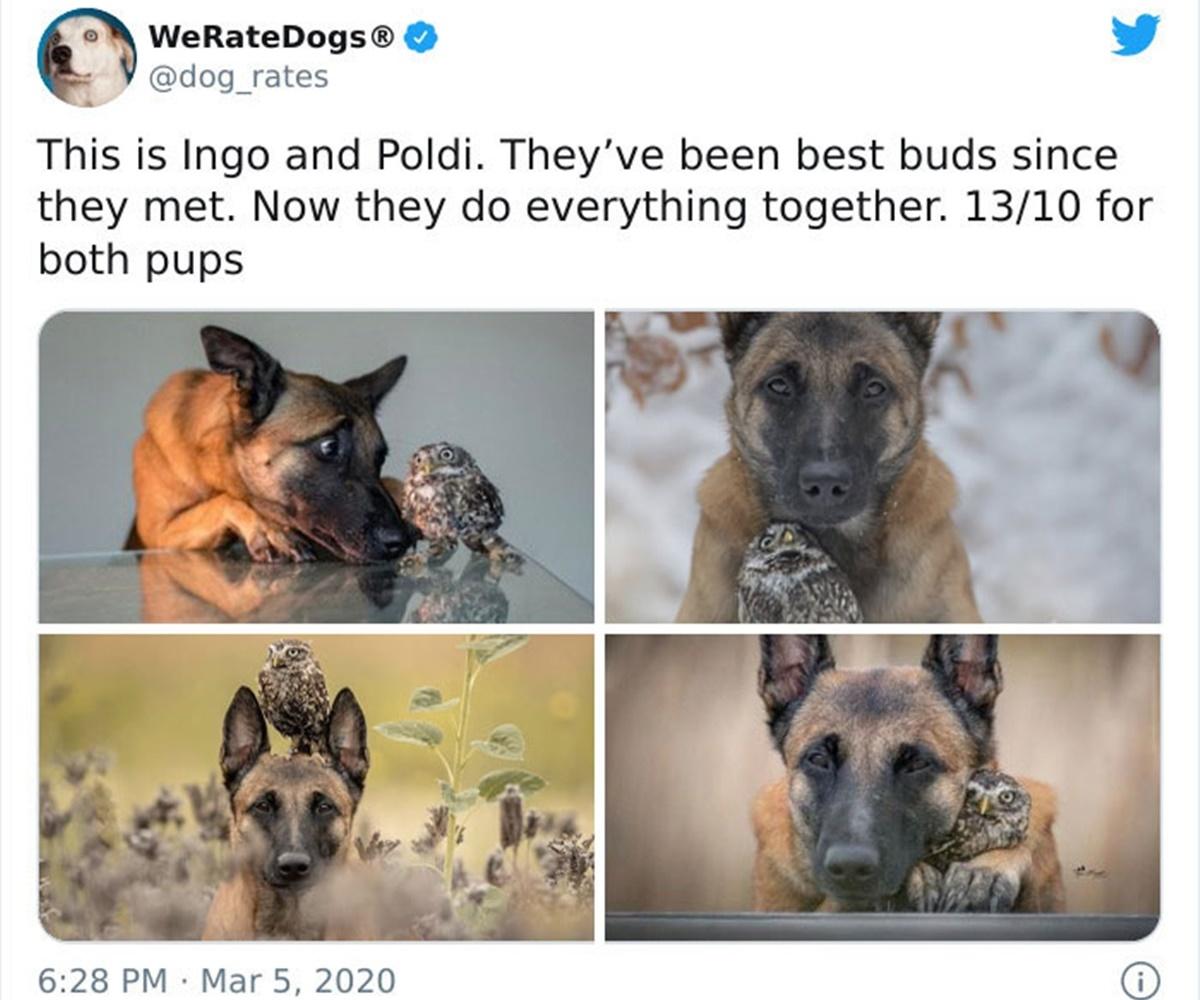 cane e gufo