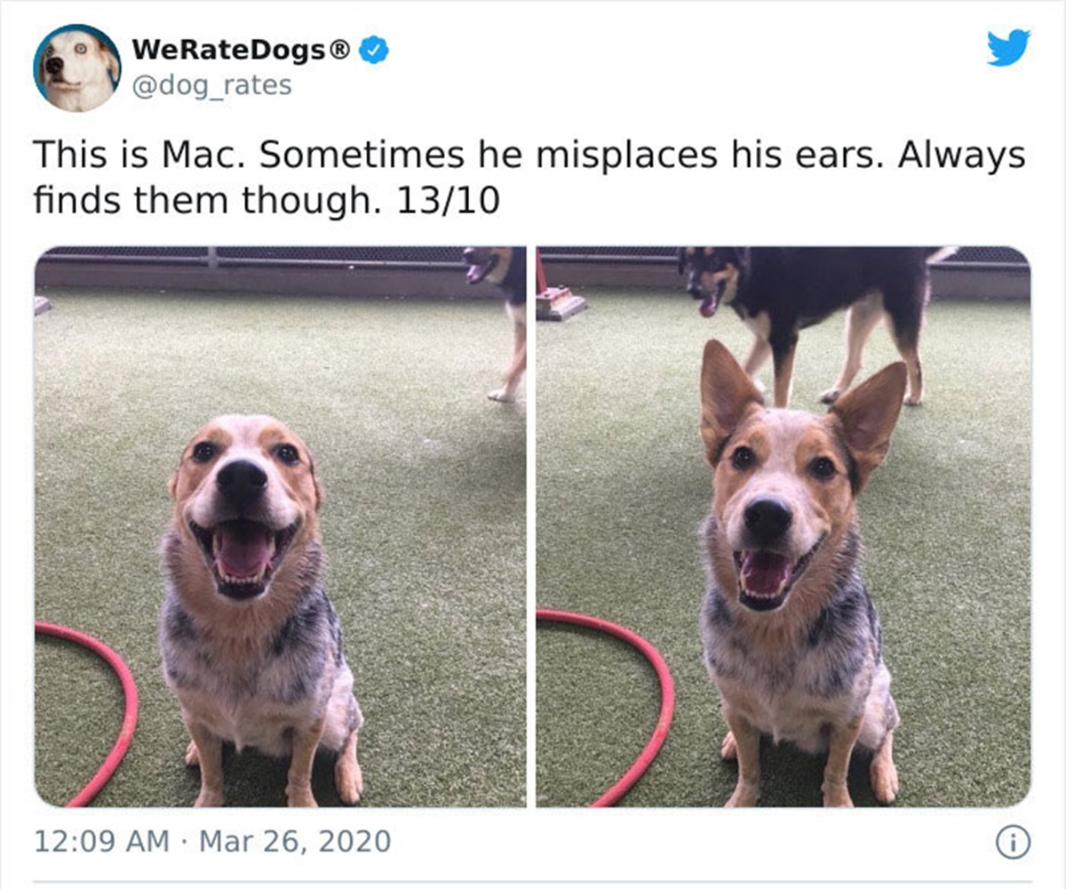 cane orecchie