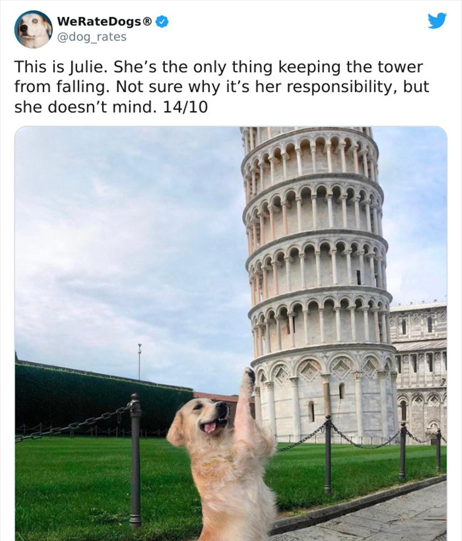 cane torre