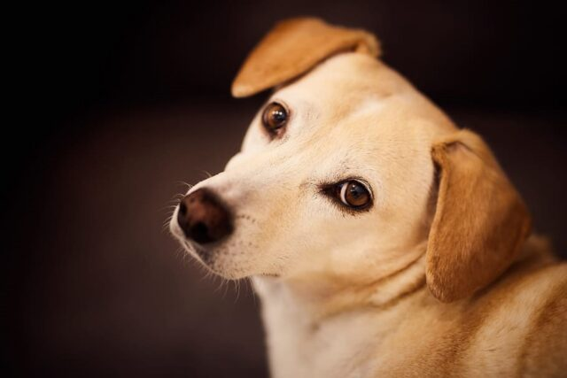 cucciolo tenero sguardo