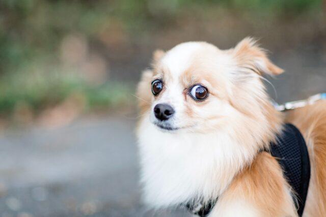 cane terrore espressione