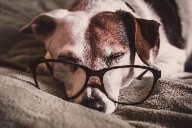 cucciolo dormire occhiali