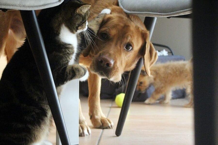 cucciolo micio guarda