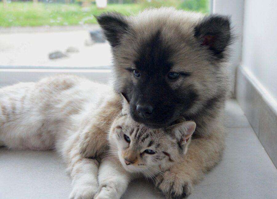 amicizia stupenda cane