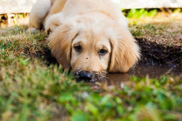 cane dolce giardino