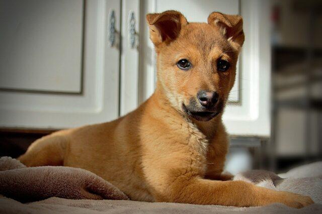 cucciolo cane peloso