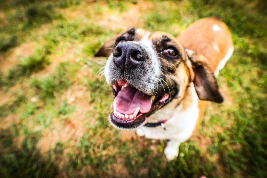 sorridente cucciolo felice