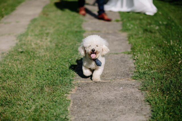 cane tenero dolcissimo