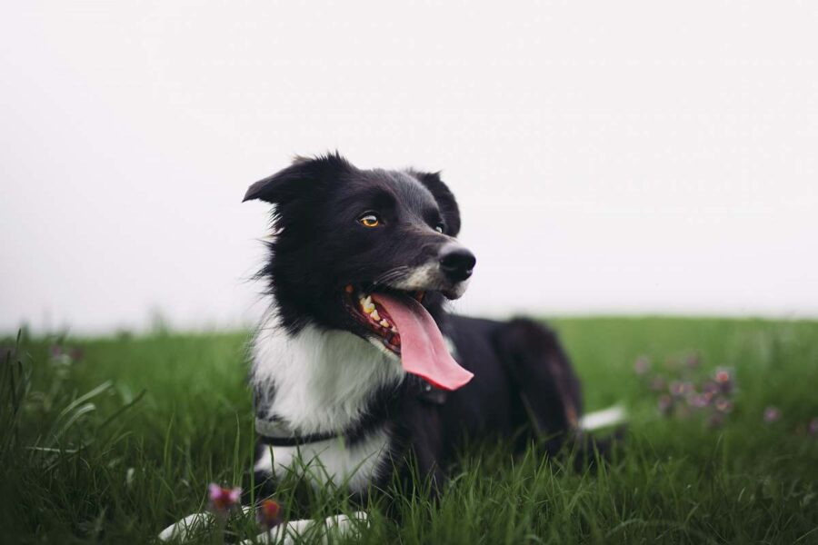 cane natura respira
