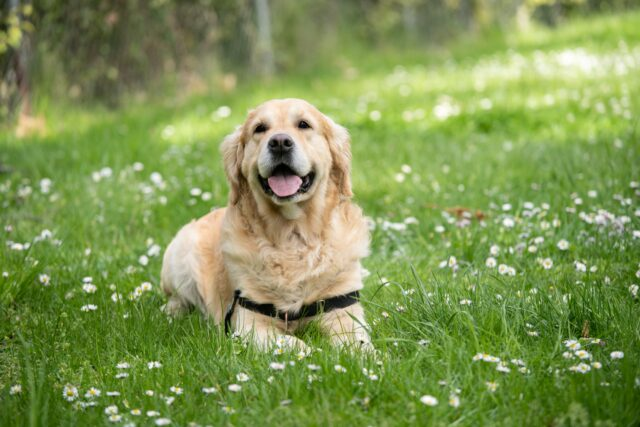 cucciolo dolce sorridere