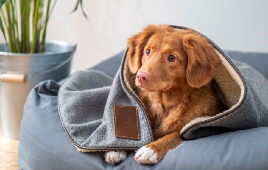 cane coperta comodo
