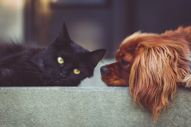micio cane amici