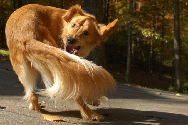 cane gioca solo