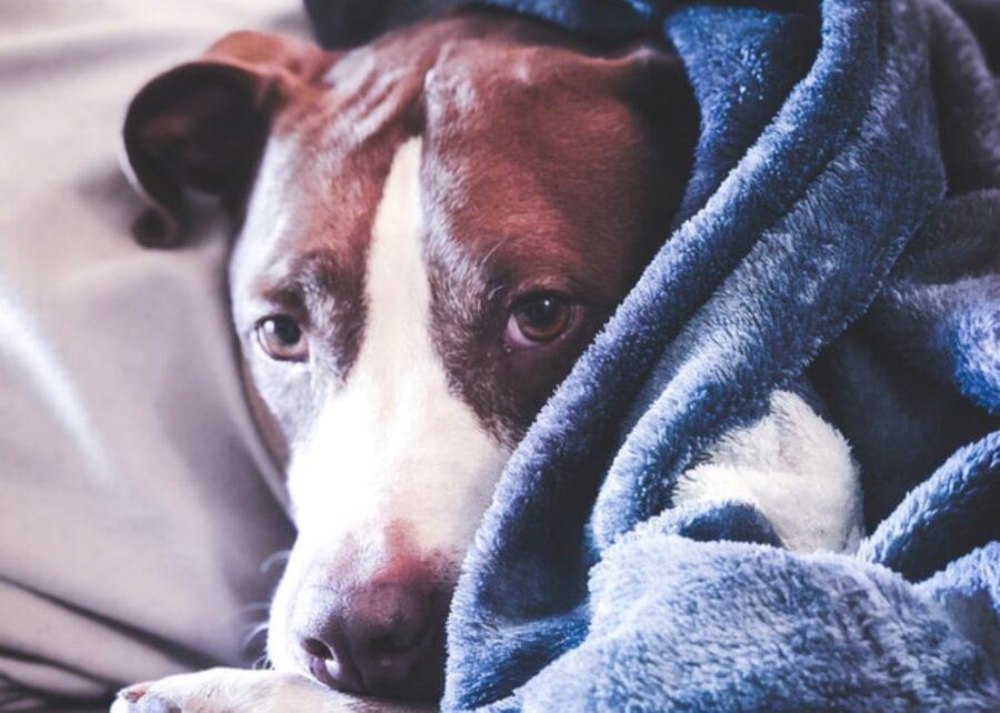 cucciolo coperta dolce