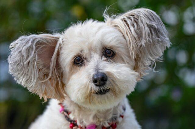 foto che ci fanno capire rapporto cane veterinario