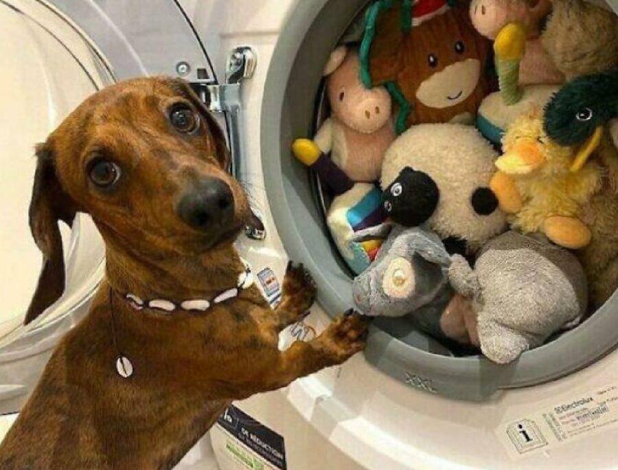 cane giochi al lavaggio