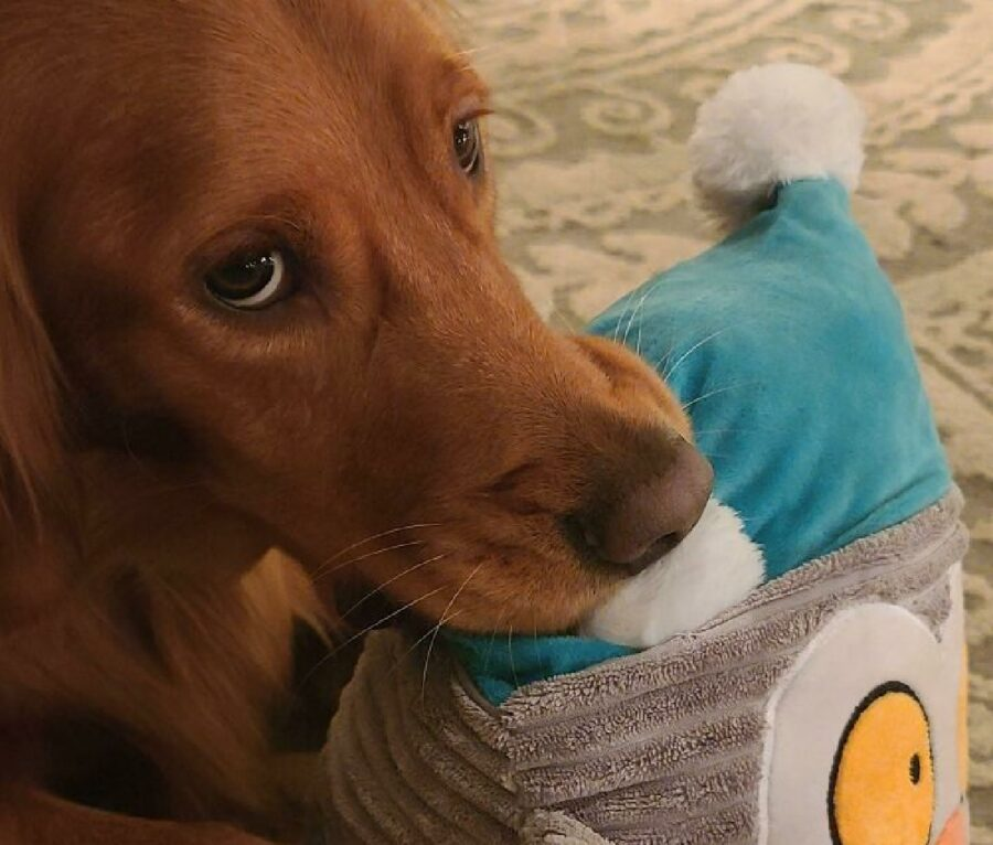 cane sguardo triste per suo gioco