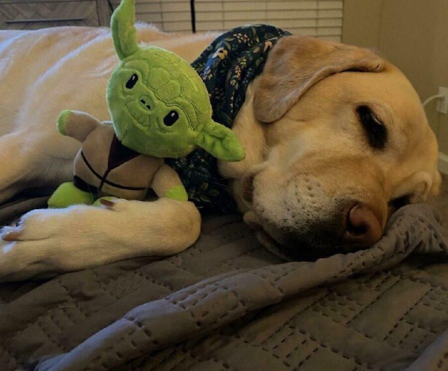 cane con baby yoda